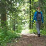 Sentier pour atteindre les pignons des bois